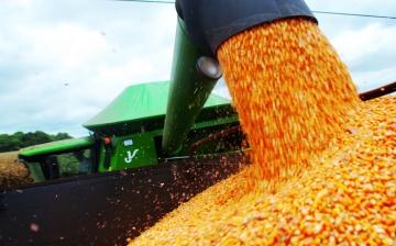 Nova safra de soja e milho do Brasil deve chegar ao mercado cedo em 2017