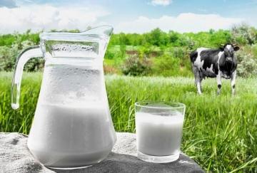 Como a dieta pode alterar a concentração de proteína no leite?