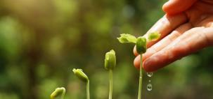Umidade no solo beneficia plantio da safra de inverno