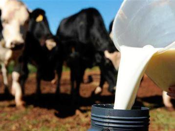 Santa Catarina: 'nadando de braçada' no leite