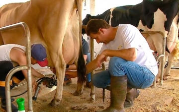 Lideranças gaúchas debateram a cadeia do leite em Brasília