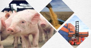 Exportações de carne suína superam resultado de 2016 no 1º quadrimestre