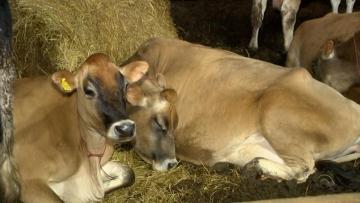Produtores adotam práticas para melhorar a qualidade do leite no Rio Grande do Sul