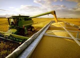 Safra brasileira de grãos deve alcançar 288,2 milhões de toneladas em 10
