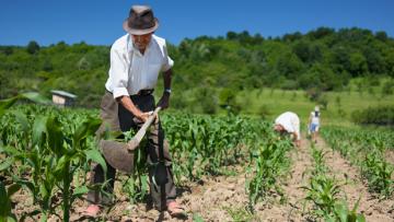 28 DE JULHO — DIA DO AGRICULTOR