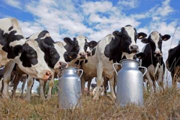 INFLUÊNCIA DA NUTRIÇÃO EM GADO LEITEIRO NA QUALIDADE DO LEITE