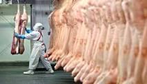 Embarques de carne suína chegam a 40,5 mil t em quinze dias