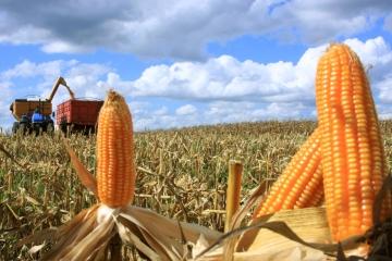 Quais as chances de os preços do milho voltarem a subir?