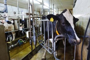 A ordenha robotizada na produção de leite no Sul do Brasil será discutida em Chapecó