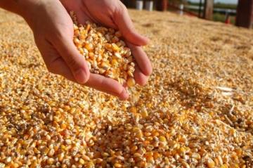 Oferta do milho deve aumentar na safra 2018/2019