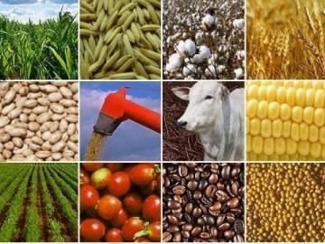 Em apenas um mês, exportações do agro somaram US$ 8 bilhões