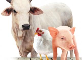 Exportação de carnes: ritmo do frango e do boi é bom em novembro
