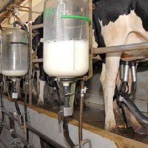 Após ano difícil, setor leiteiro espera recuperação em 2018