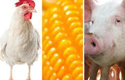 Proteína animal contribui para superávit histórico da balança comercial