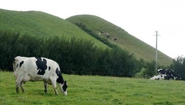 No RS, vazio forrageiro atinge produtores de leite