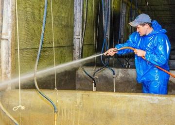Pesquisa propõem medidas para garantir biosseguridade em granjas de suínos.