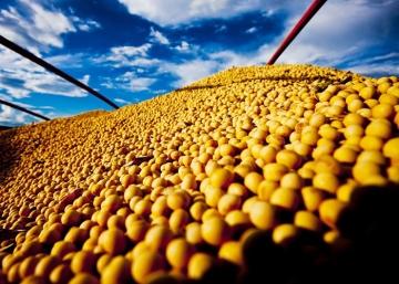 Derivados da soja, celulose, milho e carne bovina se destacam na balança do agro