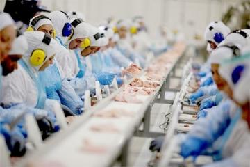 Brasil vai ampliar exportação de carne suína para Coreia do Sul e China