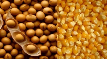 País deve ter segunda maior colheita de grãos neste ano.