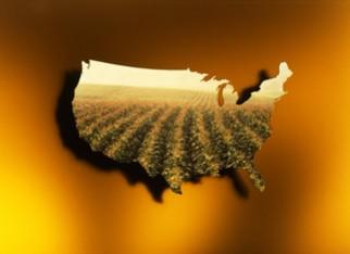 À espera das sanções chinesas aos EUA pressão maior do milho diminui