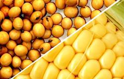 Soja continua mais cara e milho tem variações regionais
