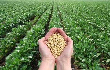 Brasil deve plantar recorde de 36,3 mi ha de soja em 18/19