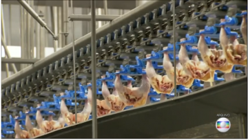 Mercado de frango sofre novo revés com veto da Arábia Saudita a frigoríficos brasileiros