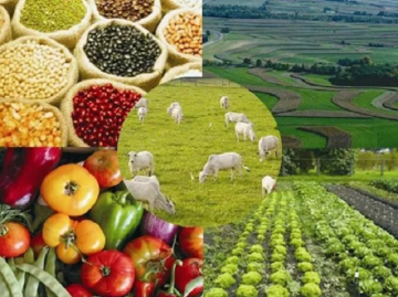 Estimativa da produção agropecuária para 2019 é de R$ 588,8 bilhões