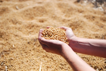 China compra 900 mil toneladas de soja nesta semana