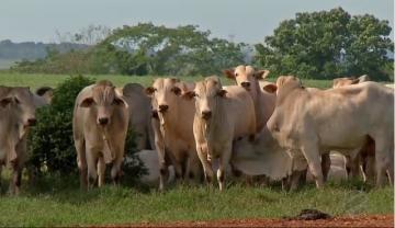 Governo anuncia suspensão da exportação de carne bovina para a China após caso de 'vaca louca'