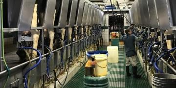 LEITE/CEPEA: preço ao produtor fica estável em junho