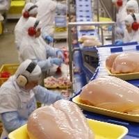 Com ritmo de embarques reduzidos preços do frango recuam