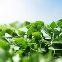 Agosto começa com prêmios e preços da soja em alta no Brasil