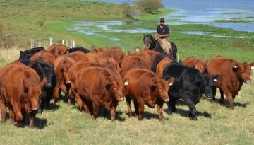 Leilão em Porto Alegre quer faturar R$ 1,2 milhão com venda de gado