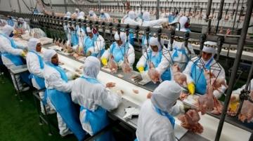 Indústria de frango e suíno espera habilitação de mais plantas exportadoras para a China