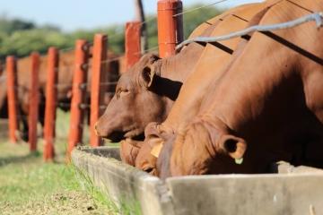 Quais os impactos do coronavírus para a suplementação de bovinos?