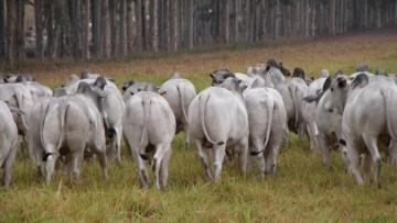 Paraná define normas de fiscalização para trânsito de animais