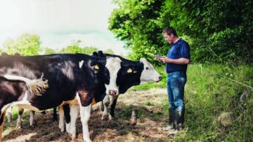 Leite: Embrapa estuda vacas que produzem mais comendo menos