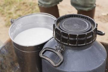 Com o programa Balde Cheio e GQC, produtores passam a produzir quatro vezes mais leite