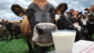 Disputa pelo leite faz preço pago ao produtor bater recorde em outubro