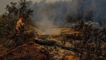 MT oferece R$ 160 milhões para recuperação da pecuária no Pantanal após incêndios