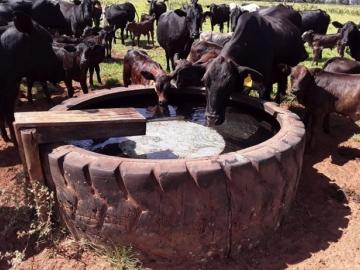 Como saber se é a hora certa de lavar o bebedouro de água do gado?