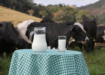 Como o leite passou a integrar a dieta humana e qual sua importância nutricional?