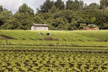 Projeto-piloto do seguro rural atende mais de 10 mil agricultores familiares em 11 estados