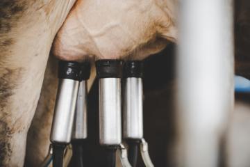 Preços do leite e derivados registram valorização
